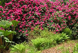 Accueil Bois Des Moutiers Parcs Et Jardins Maison Arts Crafts A Varengeville Sur Mer